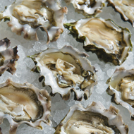 Sequim Bay Oysters